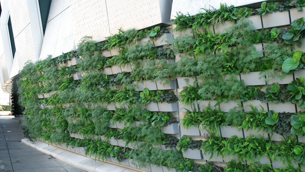 image © Outdoor Living Wall System by Live Wall
