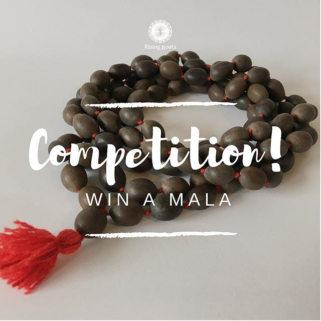 Welcome to join in our mala competition! ❤️ As you enter You may win a beautiful mala of your choice from our collection at risingroots.one for instance one of Lotus seeds, connected to goddess Lakshmi and abundance.🌈💸🙏🏻❤️ ⠀ ⠀ HOW TO ENTER: ⠀ ⠀ 1. Tag as many friends you like below (more = better) ⠀ ⠀ 2. Answer: What do you LOVE or are grateful for in this very moment? (Let's spread some love across the globe shall we?) ⠀ ⠀ 3. Like our instagram page @risingroots_shop ⠀ ⠀ Thank you and good luck! The winner will be announced on Sunday Nov 25th on @risingroots_shop ⠀ ⠀ Namaste ✨🙏🏻✨ ⠀ ⠀ #awakeninggaia #gaia #ascendingearth #ascension #kundalini #awakening #healing #5d #beyond #nonduality #mala #rudraksha #lotusseed #sandalwood #quartz #kidmalas #incense #resin #incenseresin #webshop #risingroots #innerpeace #enlightenment #liberation #freedom #love #peace #omshanti