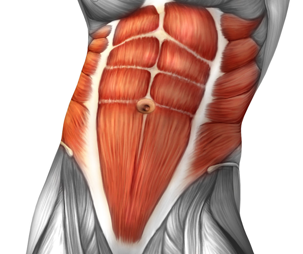 Core. Core abdominals. Six-pack abs. Transversus abdominus. Internal oblique. External oblique.