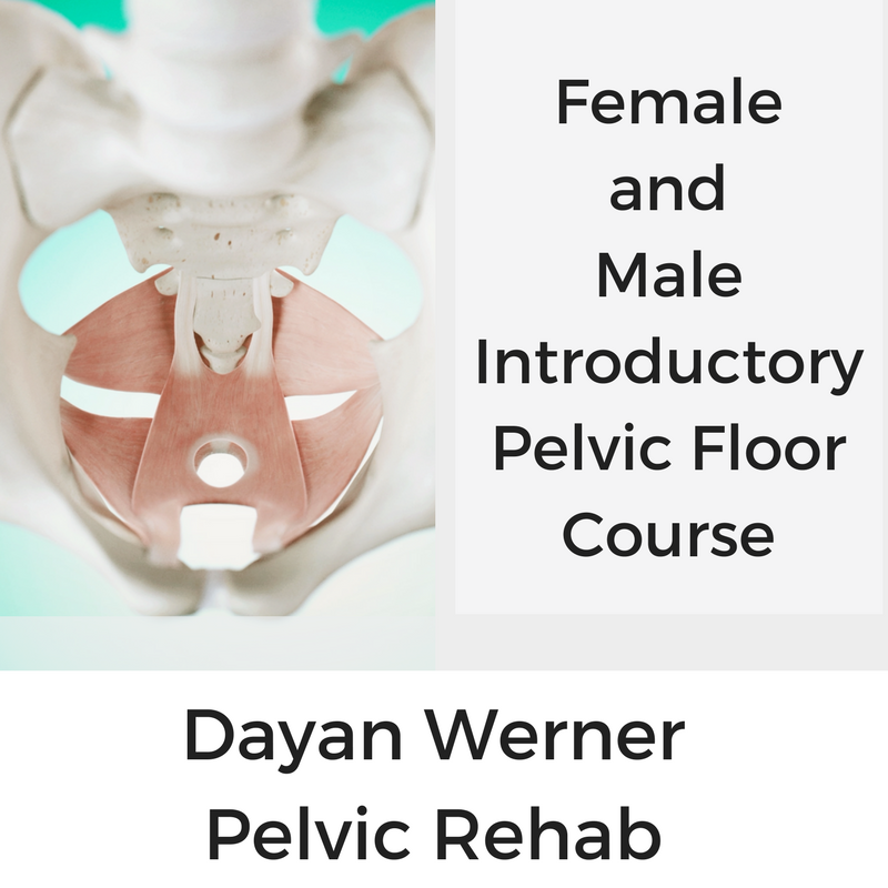 DayanWerner-Course-IntroToPelvicFloor-Thumbnail-20170917.png