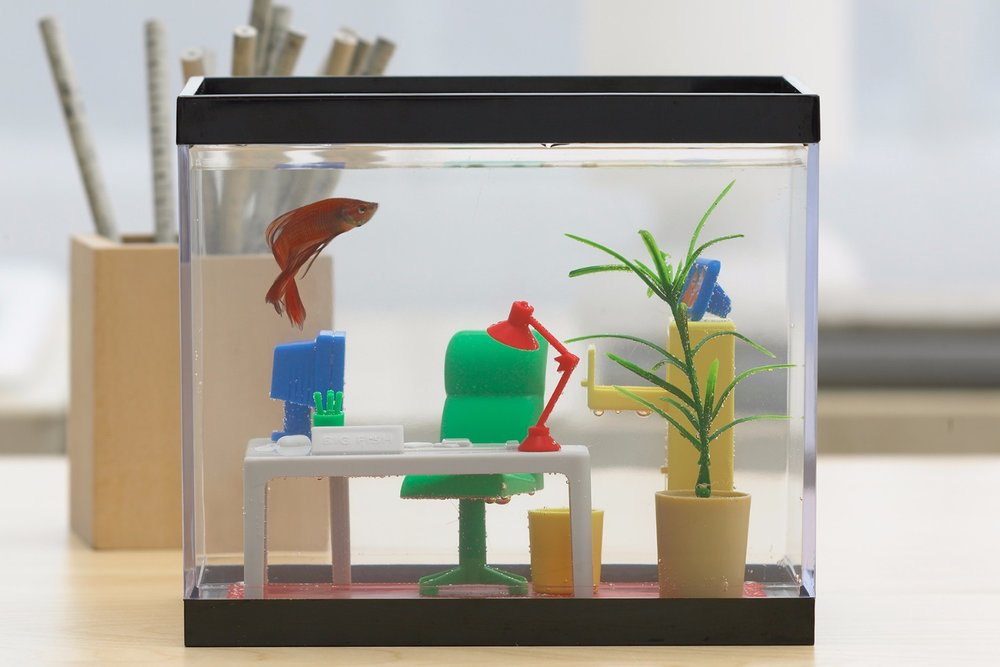office-fish-tank.jpg