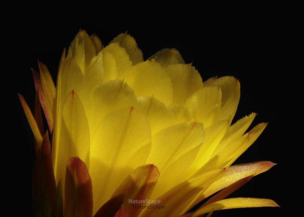 Desert Flowers Portfolio