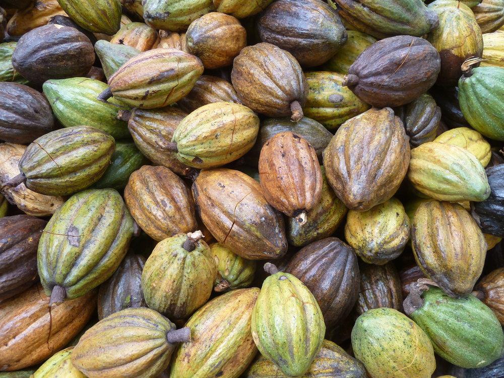 Garcoa Peru Chulucanas Kakao Haufen.JPG
