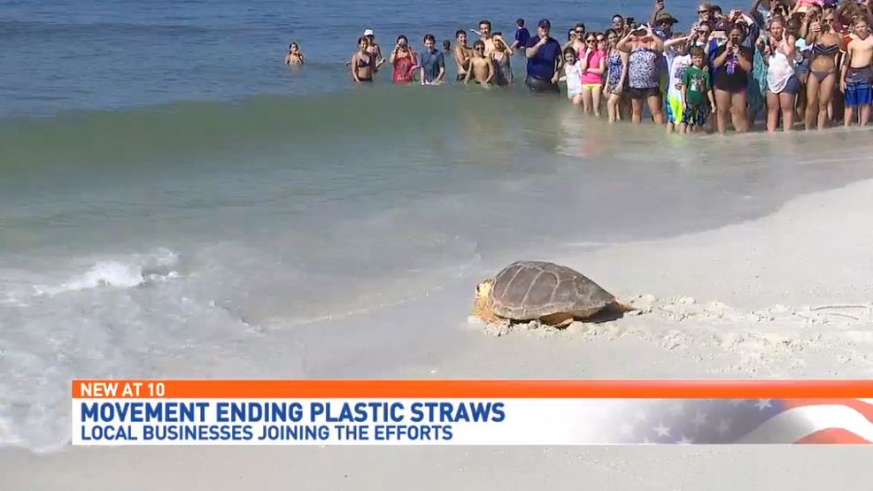 "- Alex Fox with the Navarre Beach Sea Turtle Conservation Center said plastic is now being found in 90-percent of sea life.Statistics like these have sparked movements like the ""Skip The Straw"" Project. The project encourages businesses and consumers to swap plastic straws, for paper. Biologists said the paper straws are biodegradable and better for the environment.""As far as you know, collecting trash and plastic on the beach- straws is in the top ten categories as far as overall pollution. Cigarette butts are number one,"" said Fox.Max Murphy is the general manager of Crab's Restaurant on Pensacola Beach. He said his restaurant has already made the switch. ""Converting to paper straws is just going to help the fisheries here, which in turn helps us. It's being responsible. We're trying to get as many eco-friendly products as possible,"" said Murphy. ""Six, eight months ago people were giving paper straws away. Now everybody wants them because the whole industry is going that direction,"" he said."