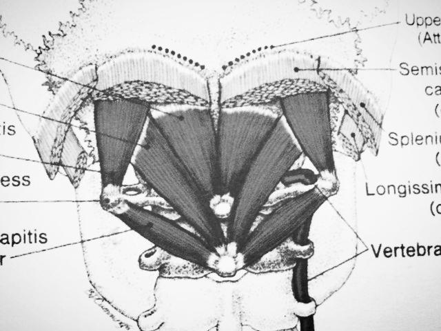 Atlas Activation Sub Occipital Neck Release