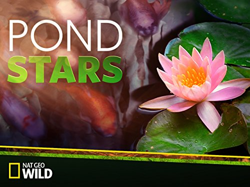 POND STARS Pond Stars follows the wild world of pond building, as this talented team transforms uninspired spaces into water feature wonderlands, bringing wildlife into backyards and public areas all across America.