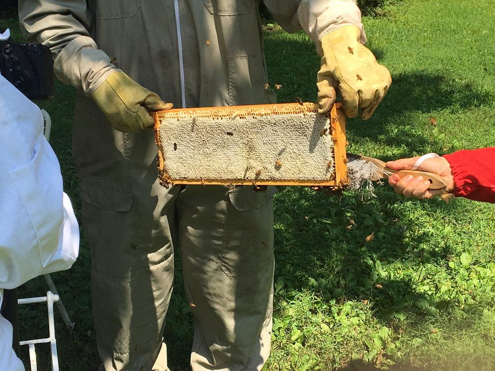 September is National Honey Month