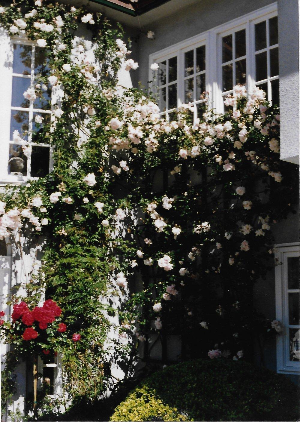 Roses4highres.jpg