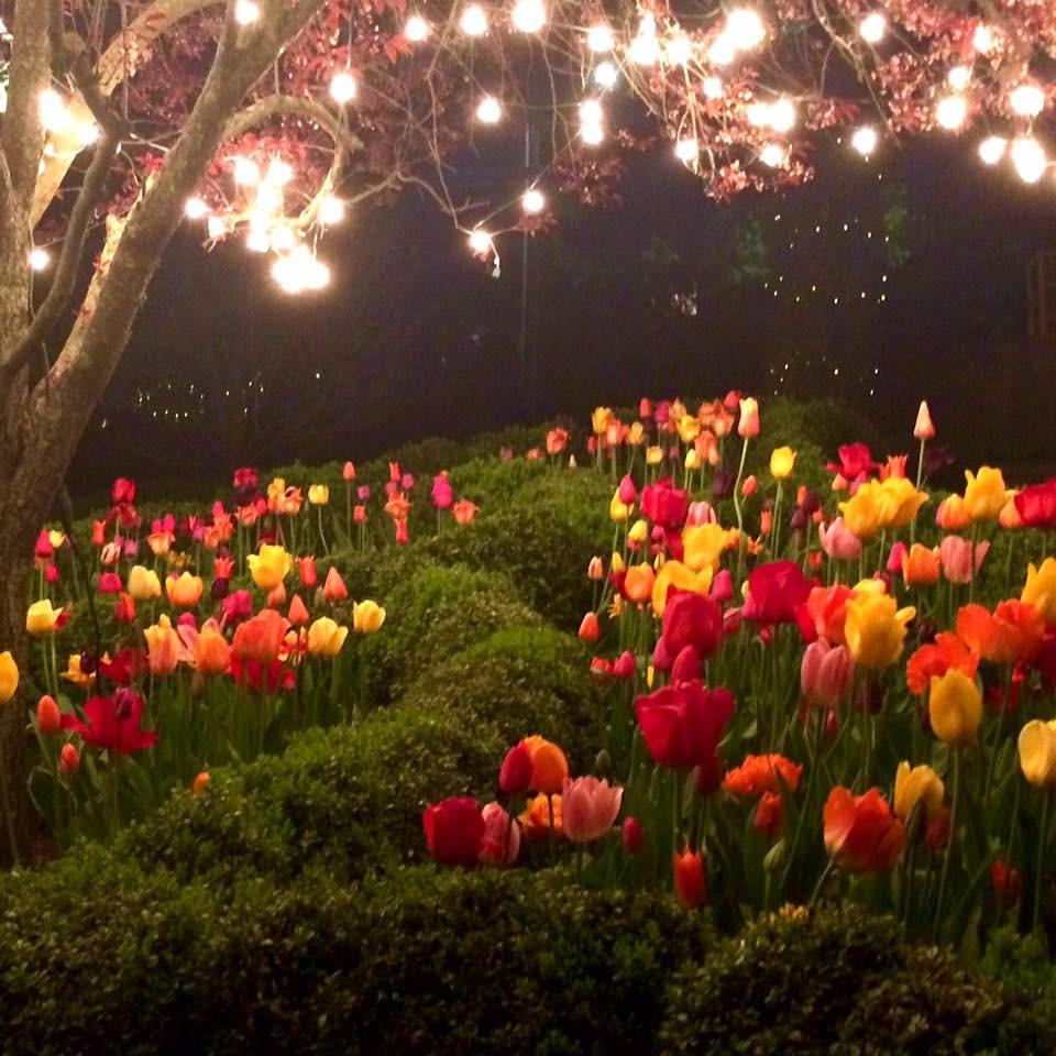 Tulips Lights.JPG