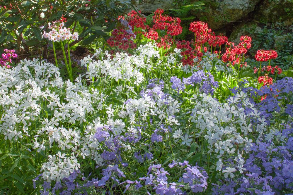 blooms6.jpg