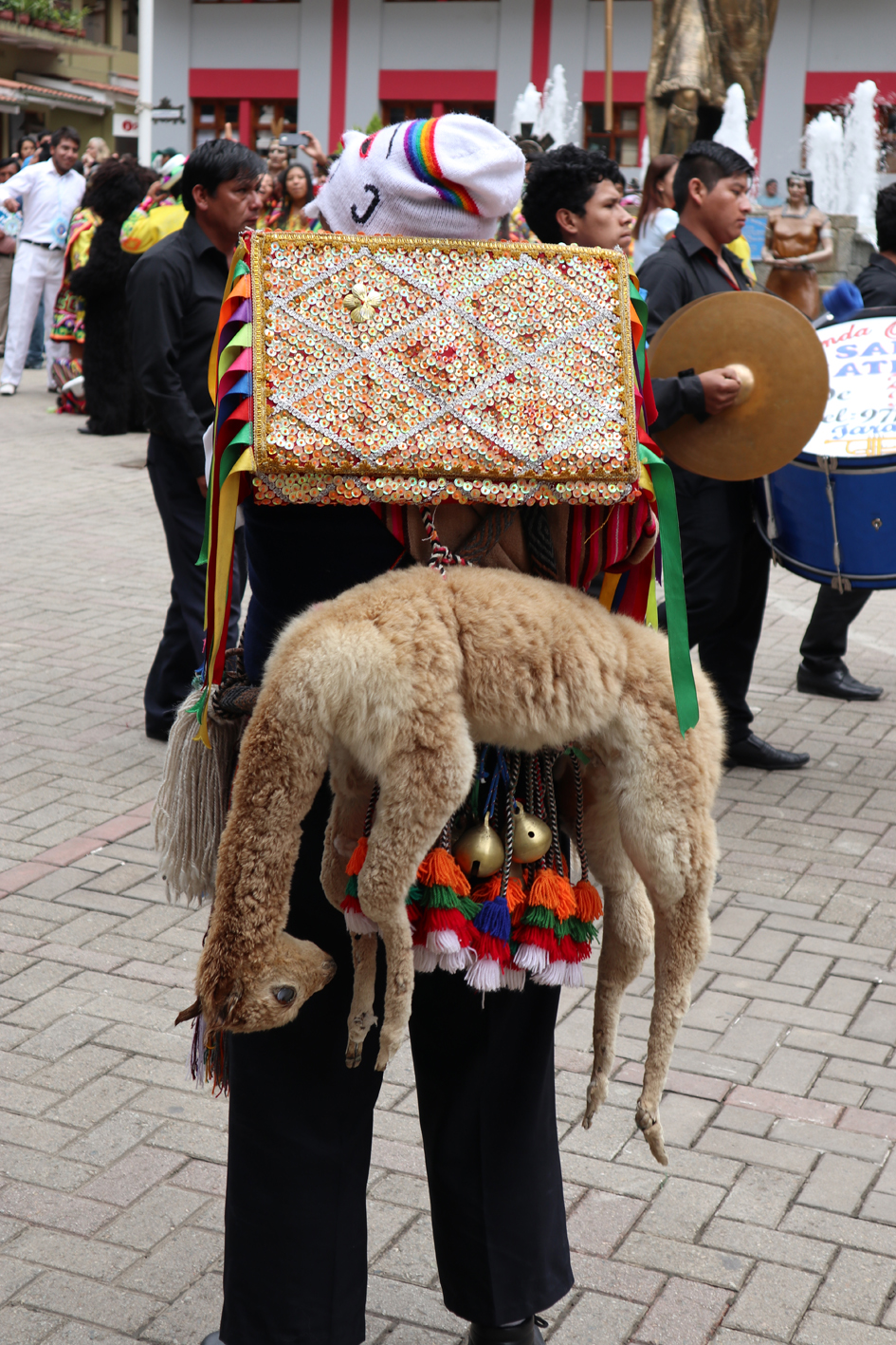 Llama not having a very good time at a festival