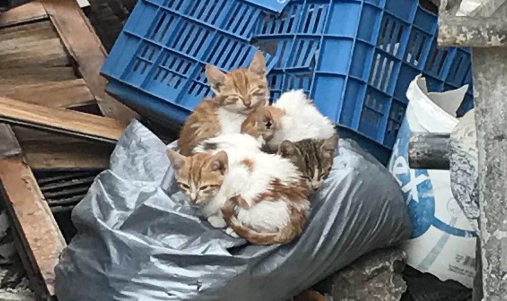 cats 4.jpg