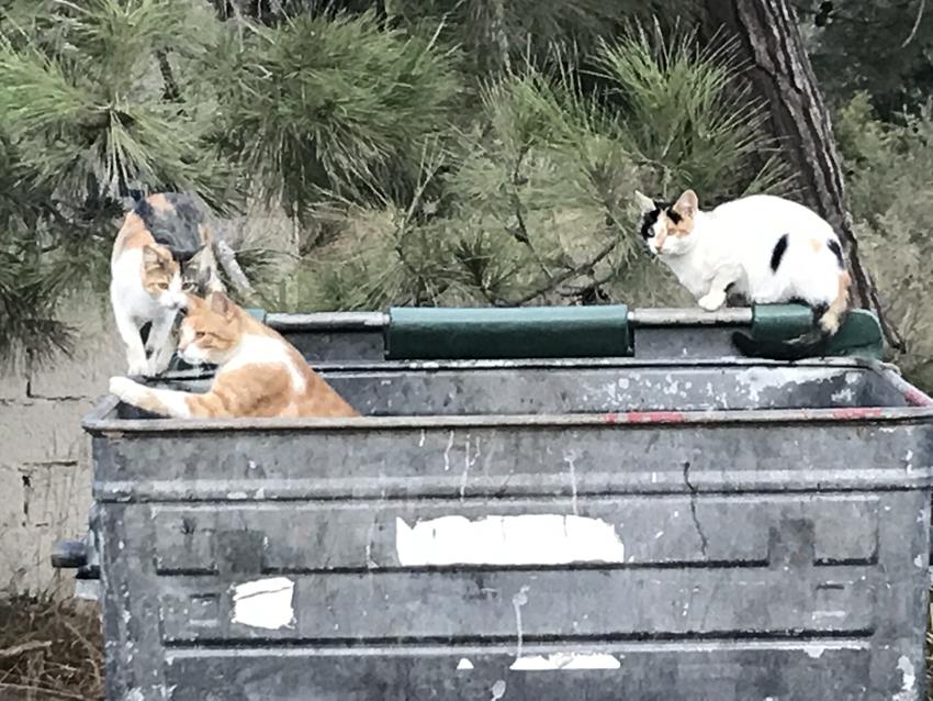 cats 5.jpg