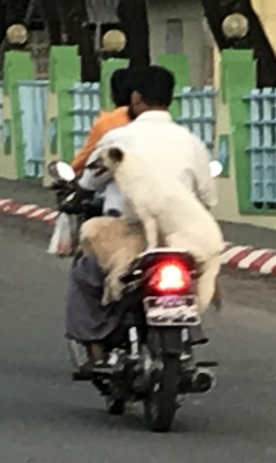 bike dog.jpg