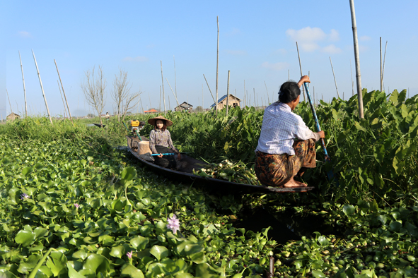 Pottering in the garden, Inle-style