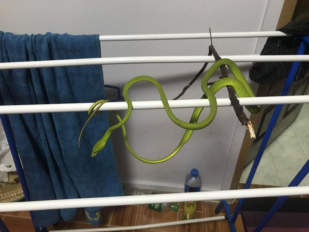 snake towel.jpg