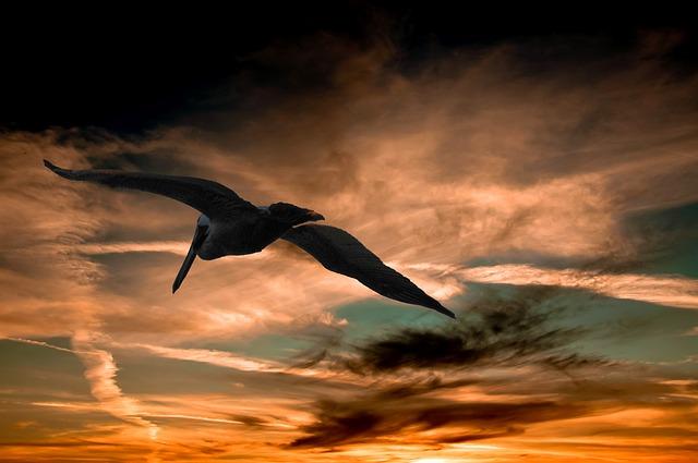 Image by birder62 on pixabay.com