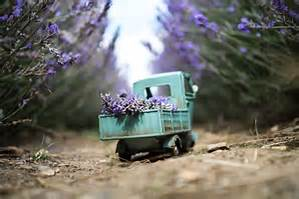 delivery truck lavender.jpg