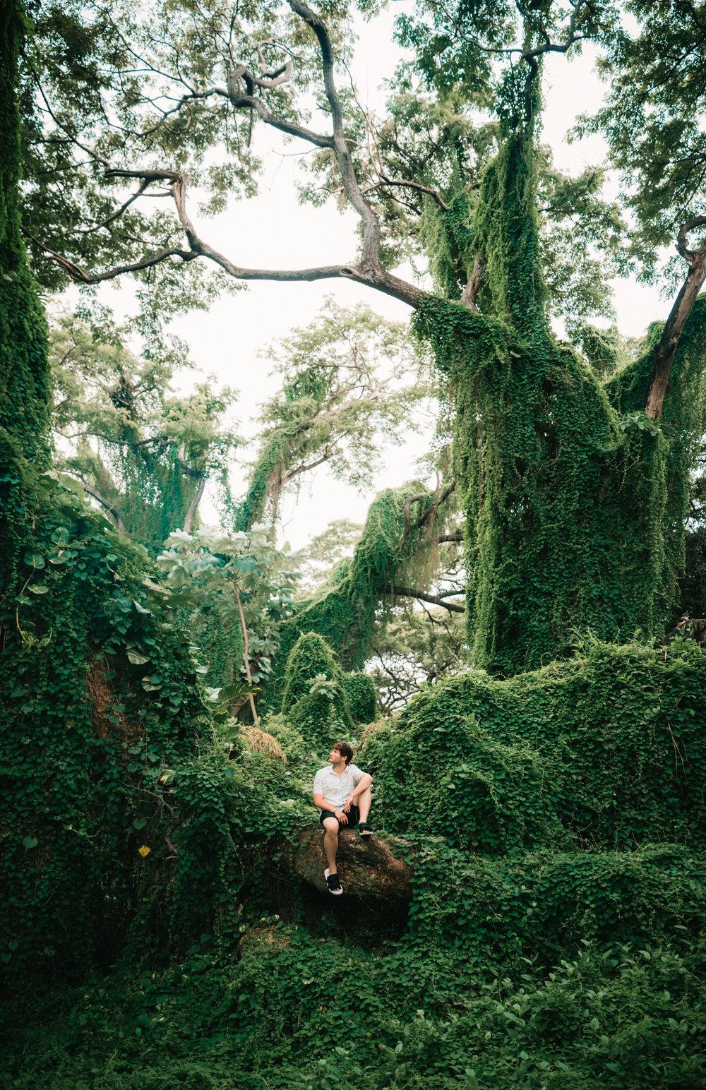 Havana Jungle-8.jpg
