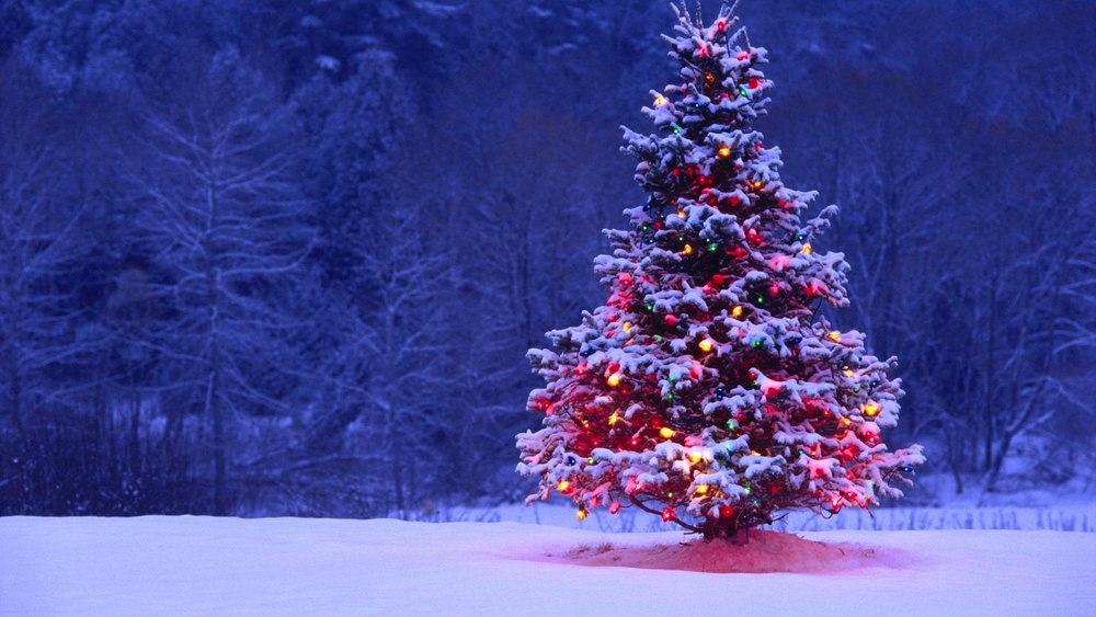 There once was a lonely Christmas tree. It was in the middle of a field, all alone. Our tree once had 250 lights burning bright. Once the loneliness set in, there were only 164 lights still on. How many lights have gone dark on our lonely tree?