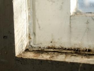 Mold-Window-sm.jpg