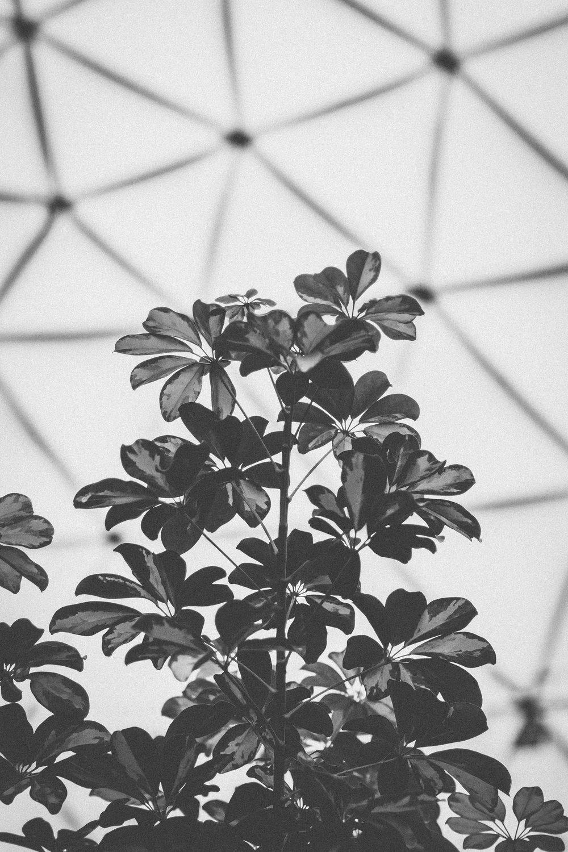 Botanical_Garden-4.jpg