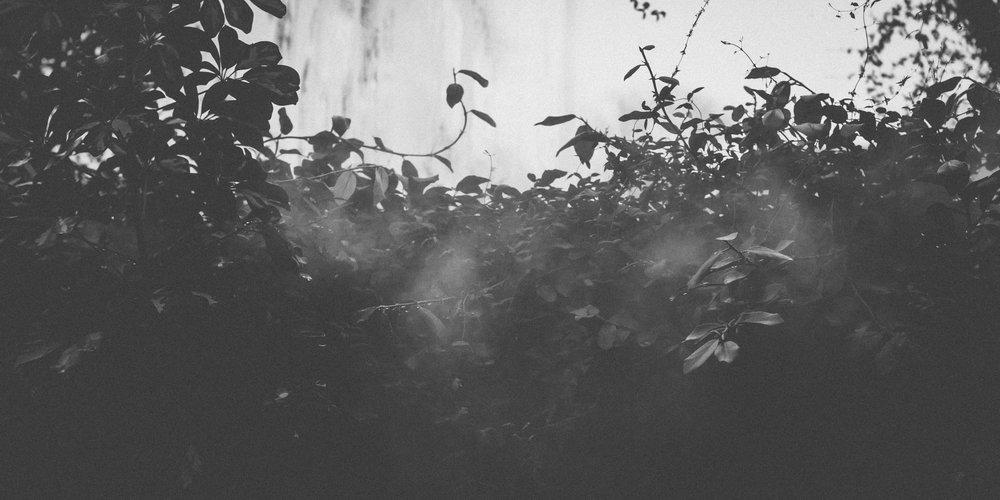 Botanical_Garden-11.jpg