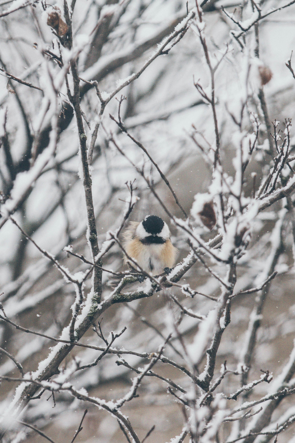 Winter_Animals-2.jpg