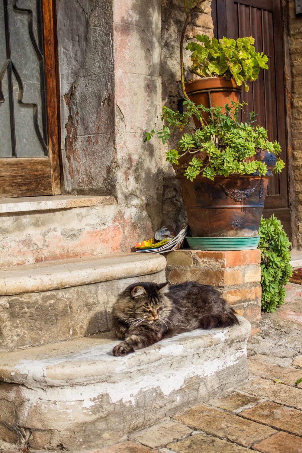Cat in Assisi