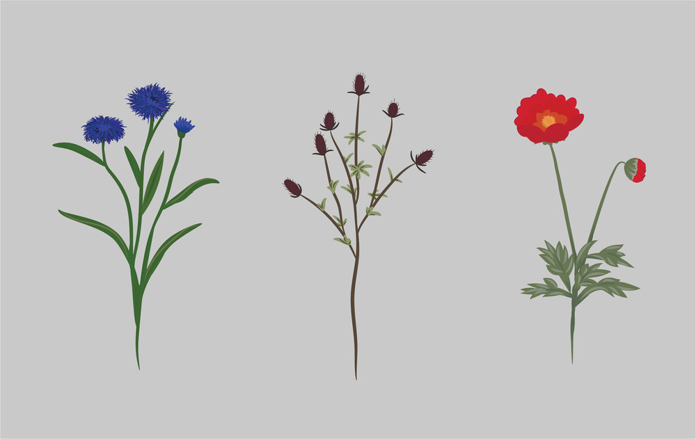 My own flowers drawn from reference images