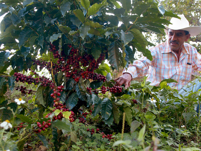 Mexican Coffee Producer