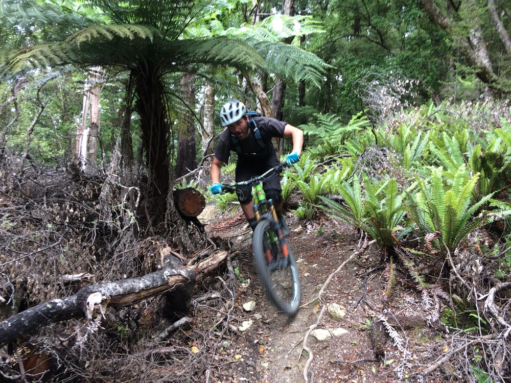 JJ of A-Line Coaching, guiding us through some of the finer points of flat corners amongst the ferns.