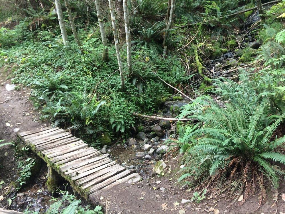 More Squamish trail porn...