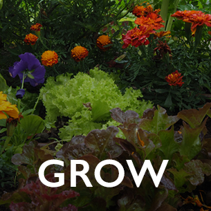 Copy of Grow Ethos