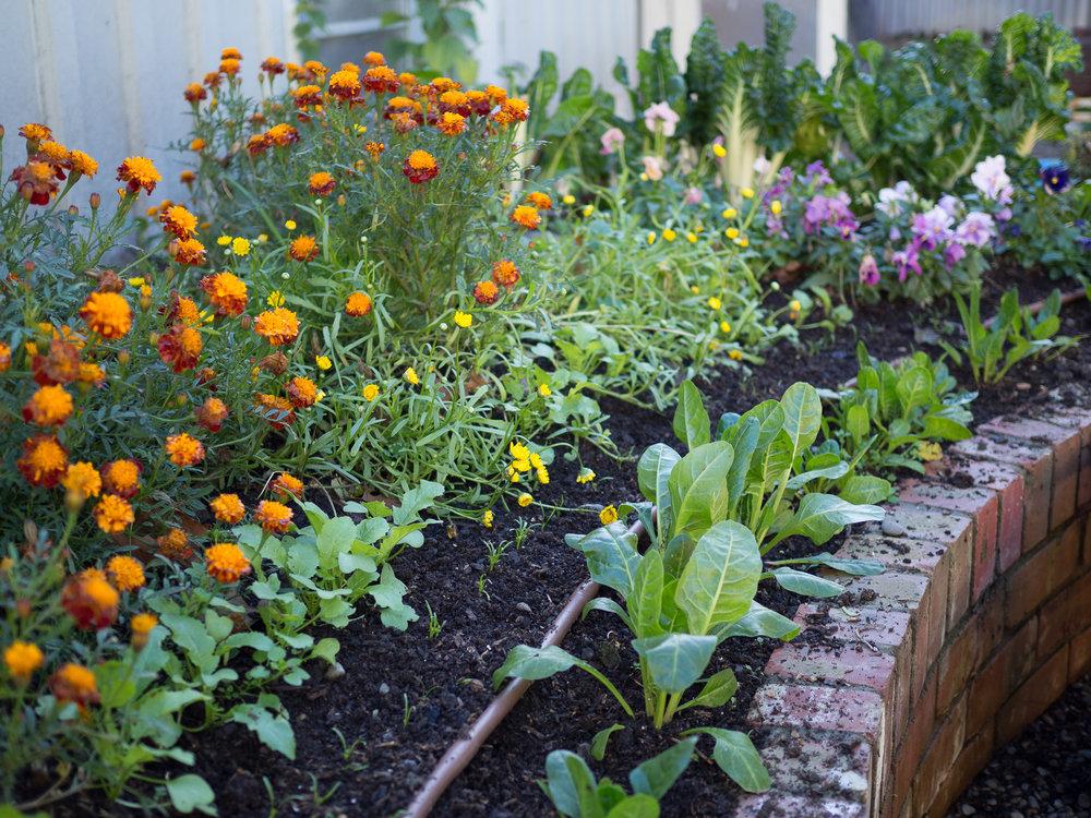 Flowers & Spinach.jpg