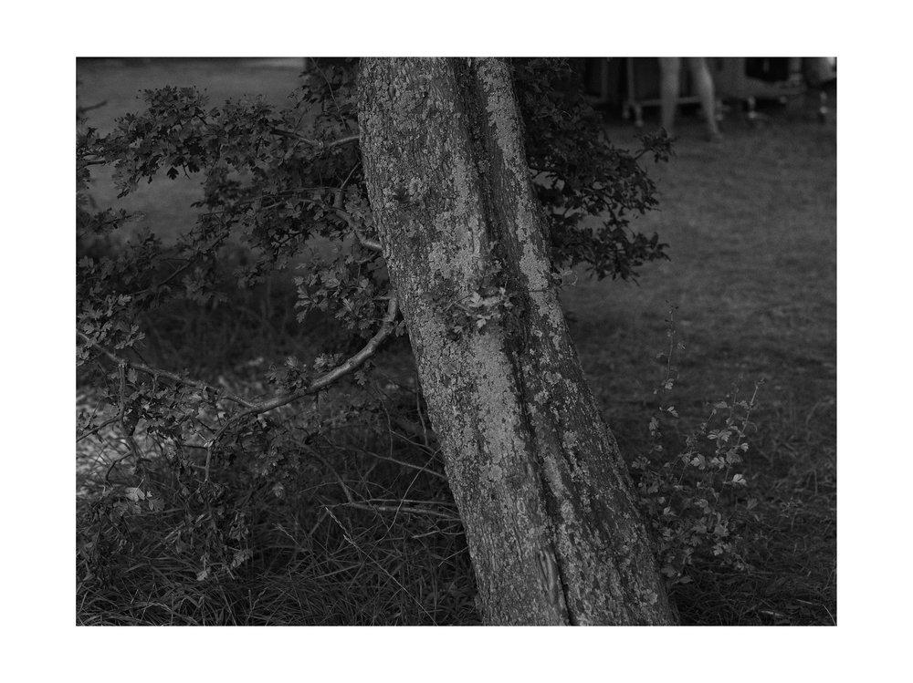 Roskilde_2015_082 (1).jpg