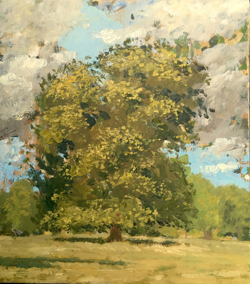 Oak Tree - Bedfordshire , High Summer ( Oil on panel ) 25.5 x 22.5 cm