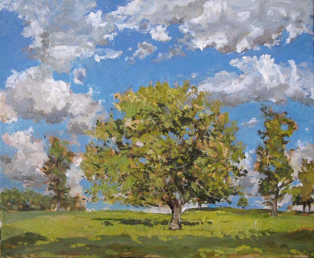 Oak Tree in June Light - Lowther ( Oil on Linen ) 38 x 45 cm