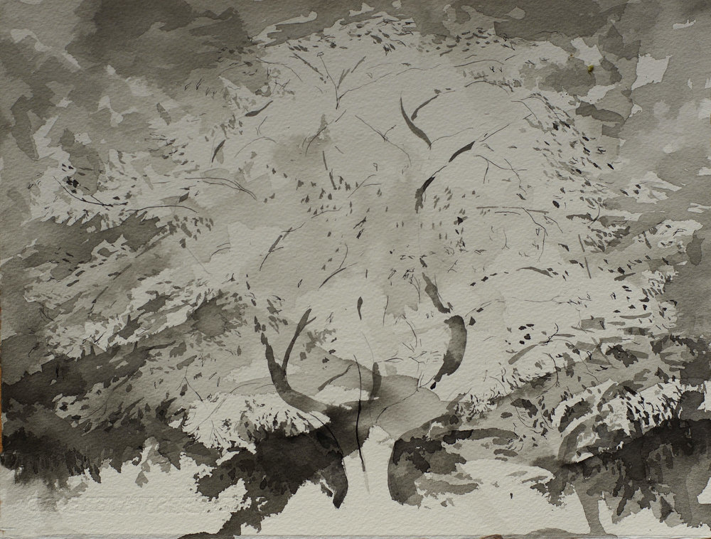 Temple Tree I Kurokawadani Shikoku ( Ink on Paper ) 28.5 x 37 cm