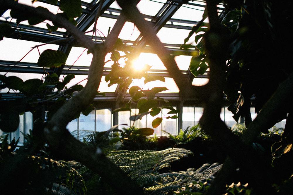 ohhedwig-blogger-berlin-botanischer-garten_2