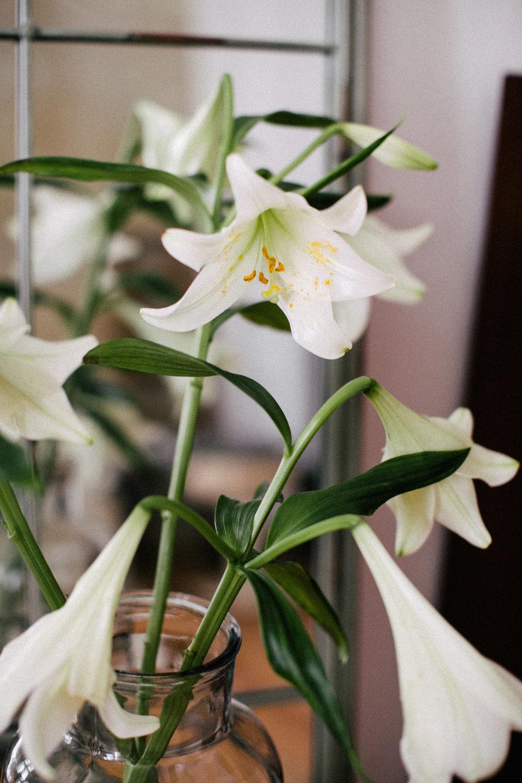 Blumenhocker-diy-katzen-einrichtung_2