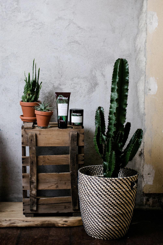 loreal-botanicals-freshcare-ohhedwig_2.jpg