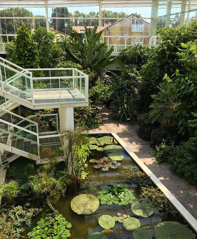 An example of an Italian botanic garden well done 👏🏻🌴🌿 #OrtoBotanicPadova #Sunday #Jungle #BotanicGarden #SolarActiveBuilding #Padova #SundayTour #NatureLover #PlantsLover #FlowersLover #Landscape #LandscapeDesign #Architecture #ArchiLover #DesignLover #Outdoor #Outdoorliving #DerekCastiglioniOfficial #OutdoorSpaceDesigner #Osd #TheUrbanGardener #MyLifeIsAJungle  #FollowMyGreenAdventures