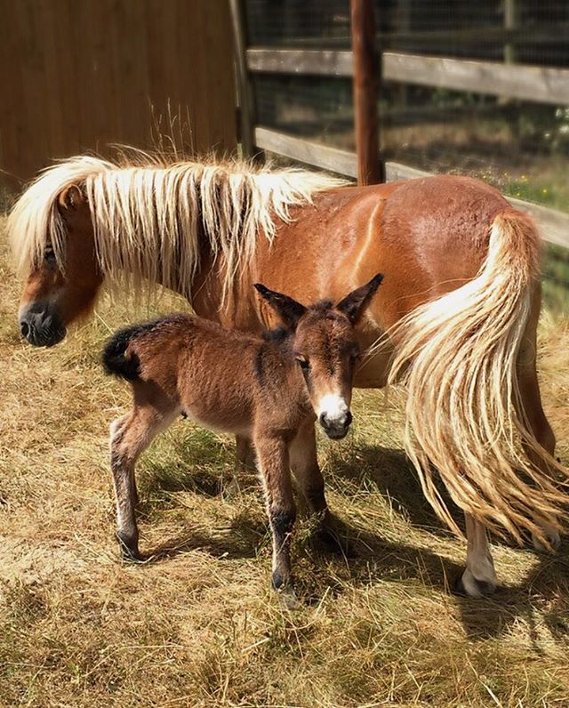 On my way to work today 🐴 we have a new arrival at client property 💚 #Pony #Puppy #ILoveMyJob #Friday #FridayVibes #TGIF #AnimalLover #NatureLover #PlantsLover #FlowersLover #Landscape #LandscapeDesign #Architecture #ArchiLover #DesignLover #Outdoor #Outdoorliving #DerekCastiglioniOfficial #OutdoorSpaceDesigner #Osd #TheUrbanGardener #MyLifeIsAJungle  #FollowMyGreenAdventures