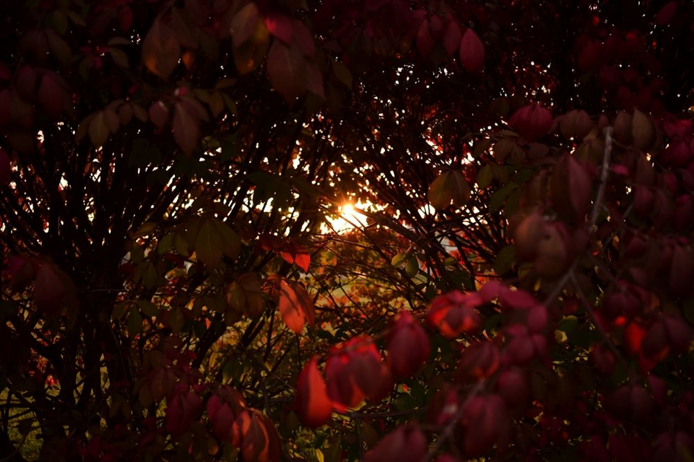 landscape photography akron ohio red leaves golden hour