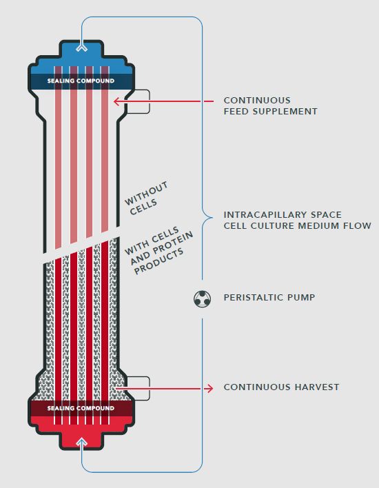 Hollow Fiber Bioreactor