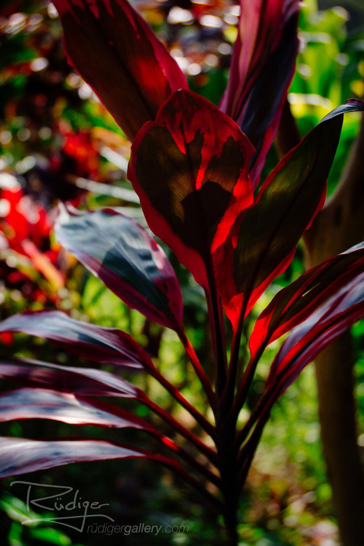Red Eden
