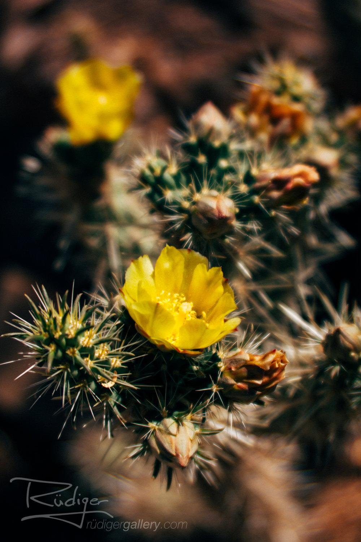 Rudiger-Poe-201728-Desert-Flora-500-Edit-1920.jpg