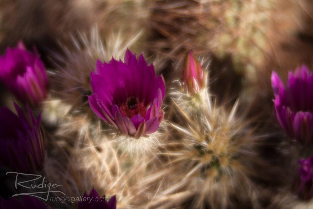 Rudiger-Poe-201728-Desert-Flora-125-Edit-1920.jpg
