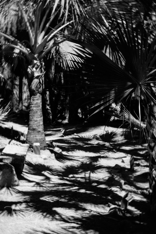 Rudiger-Poe-201728-Desert-Flora-628-1920.jpg